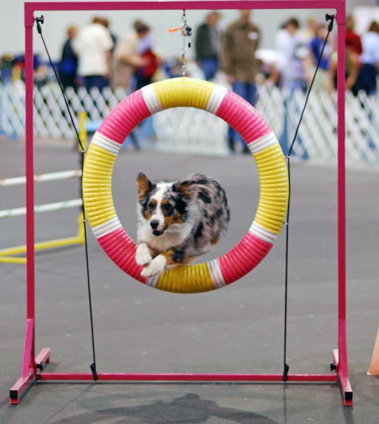 Advantages Of Dog Grooming Slideshare