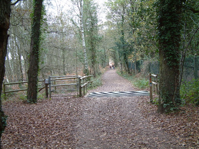 Avon Heath Country Park, Dorset - geograph.org.uk - 84689