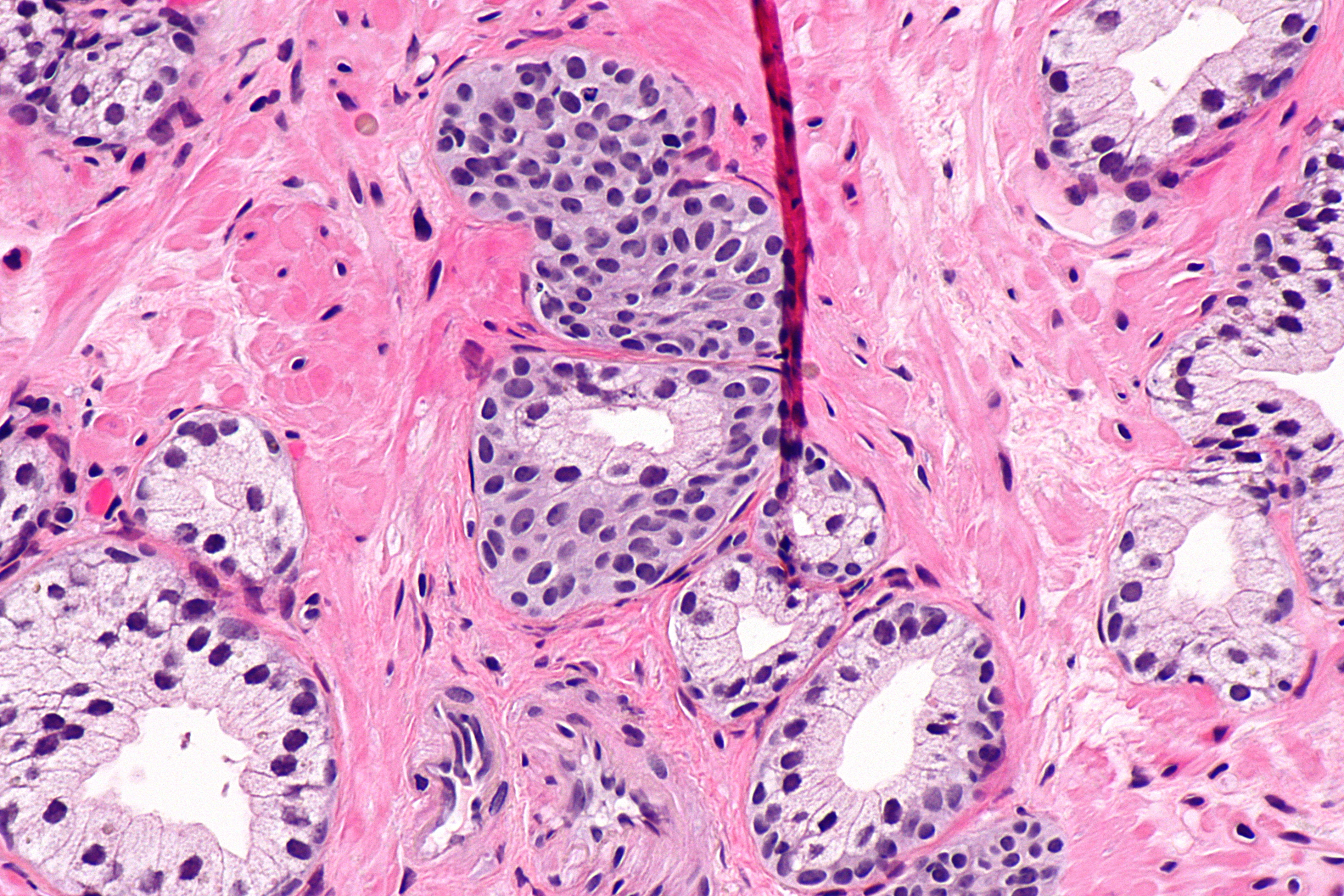 Cells That Build Bone By Secreting The Required Materials