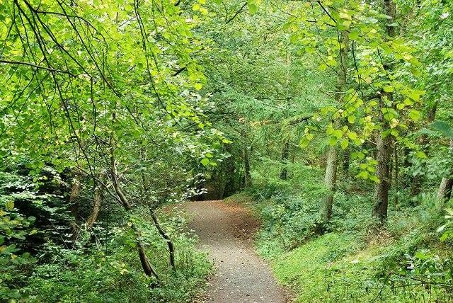 Belvoir forest, Belfast (2) - geograph.org.uk - 1515547