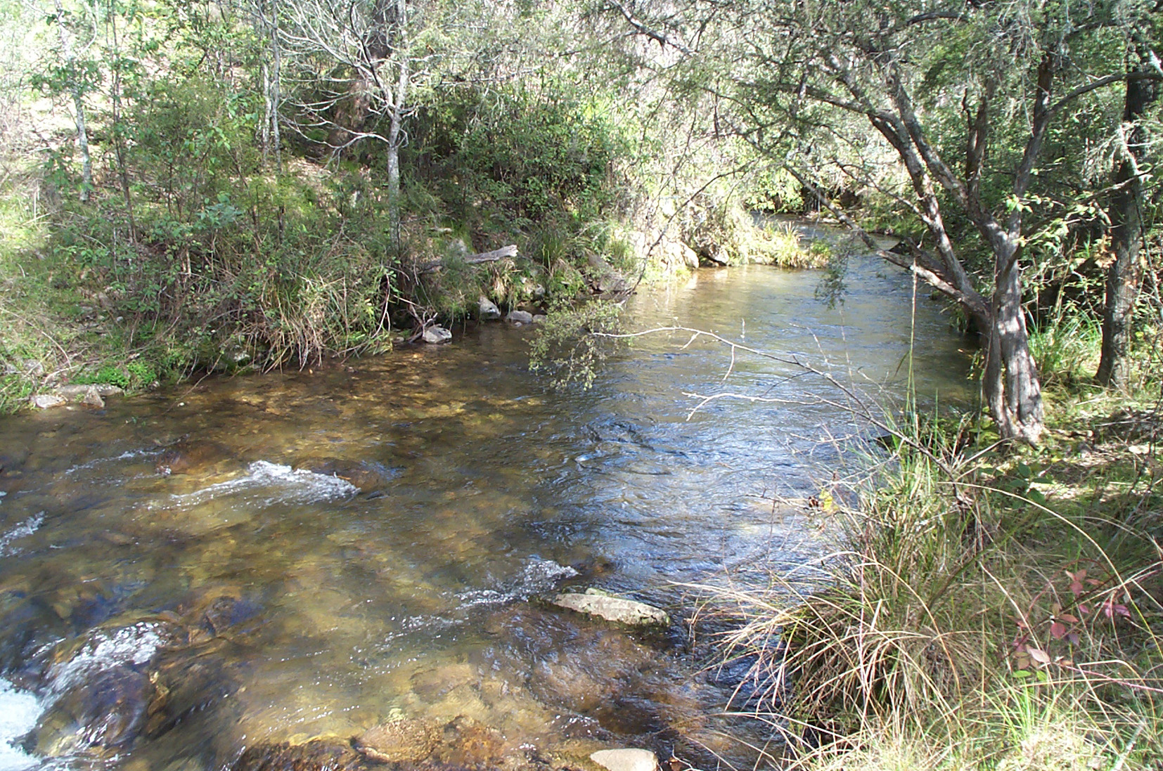 Buckland River (Victoria)