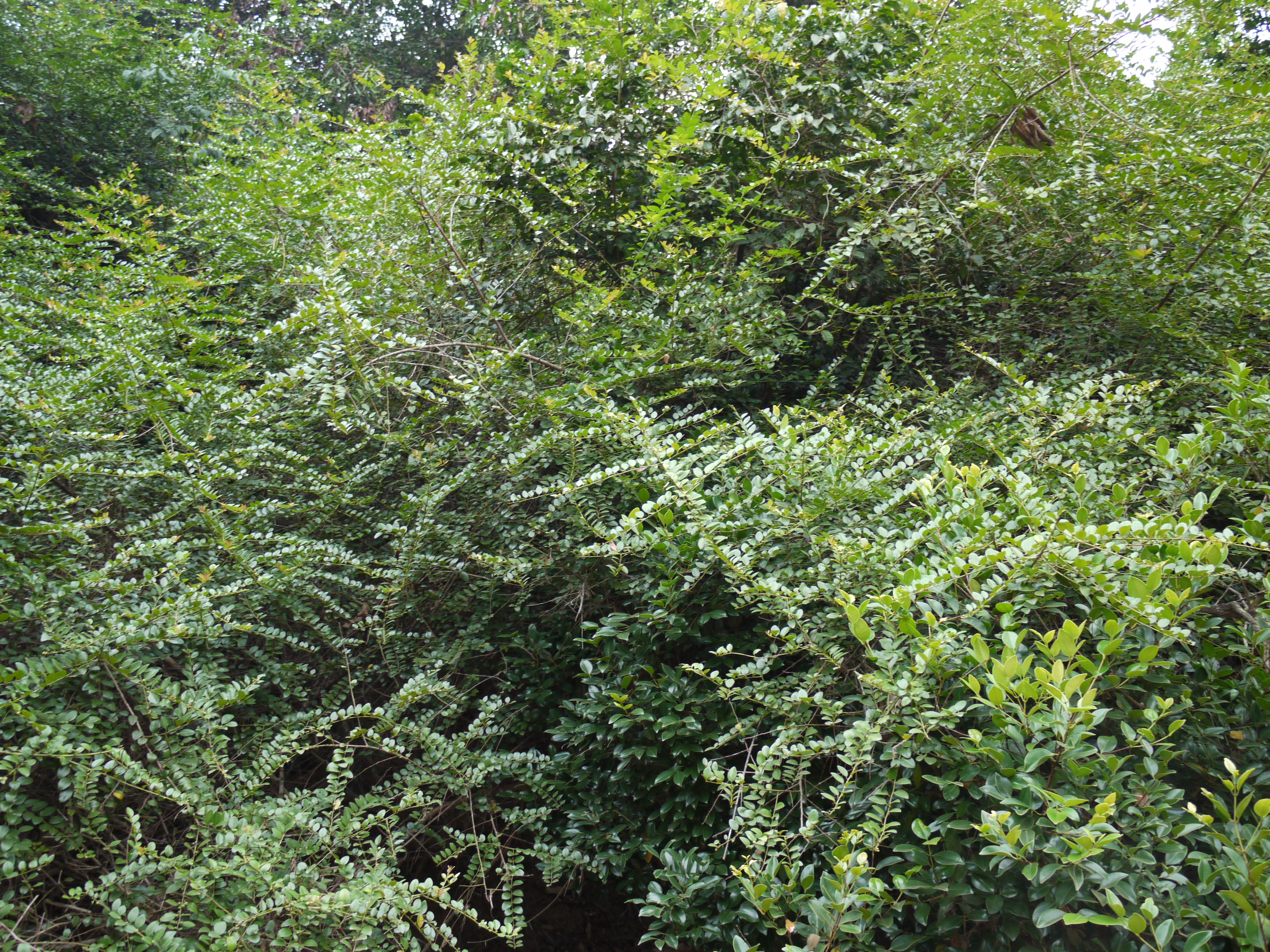 Filecat Thorn Bush 5661444607g Wikimedia Commons