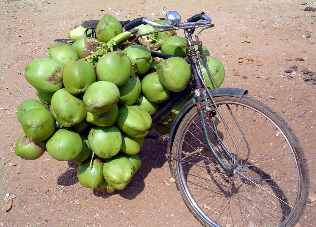bicycleloadedwithtendercoconutsforsale.arnataka,ndia.altbicycleloadedwithsomanygreenfruitsthattherearwheelcannotbeseen.