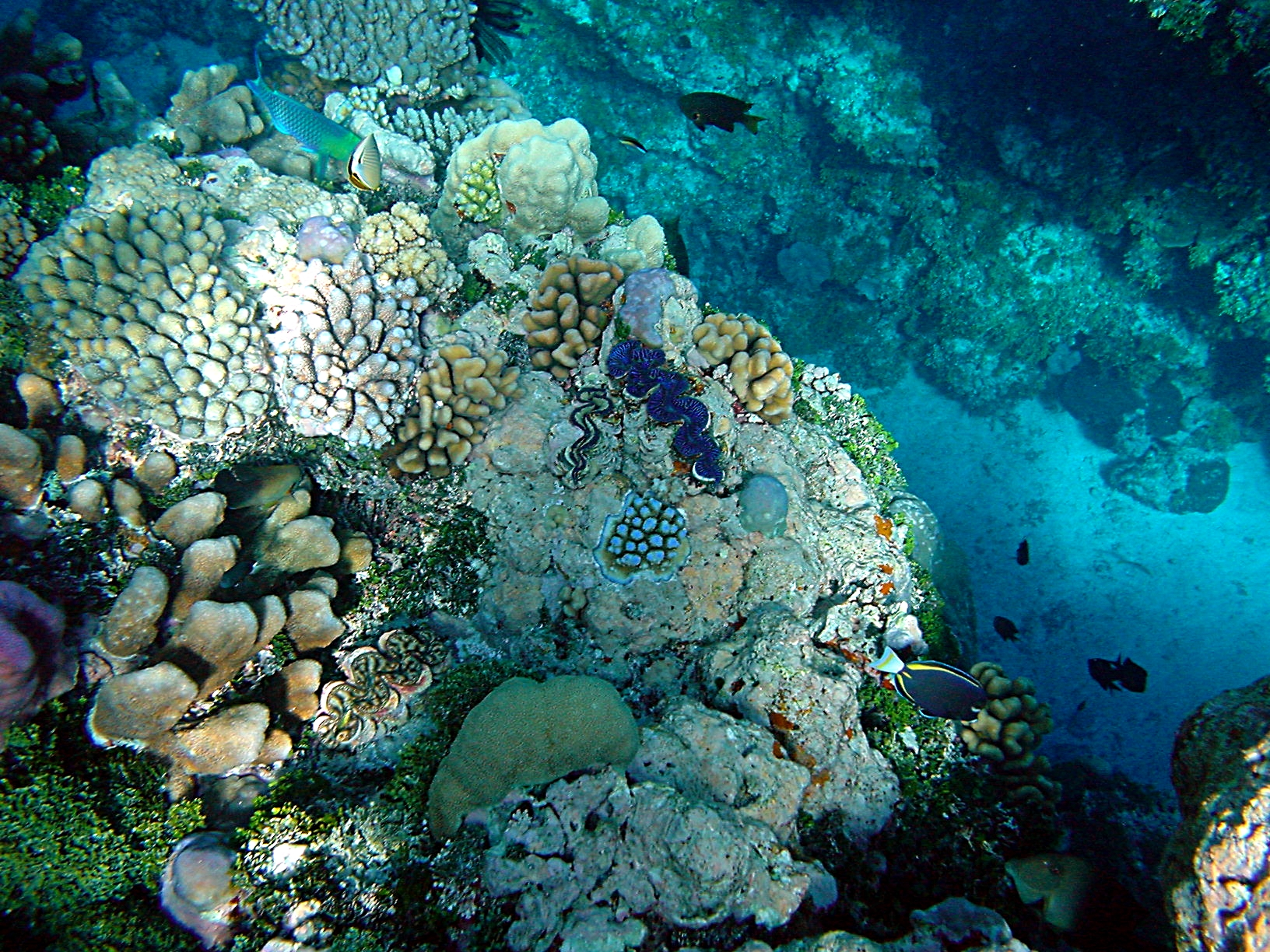 File coral reefs jpg wikimedia commons for Ocean floor description