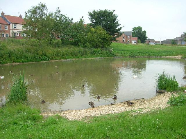 Duck Pond, Fridaythorpe - geograph.org.uk - 1374856
