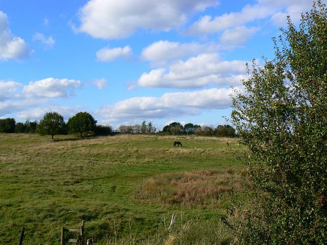Field near Sheepslaight Plantation, Stanton Fitzwarren, Swindon - geograph.org.uk - 1526512