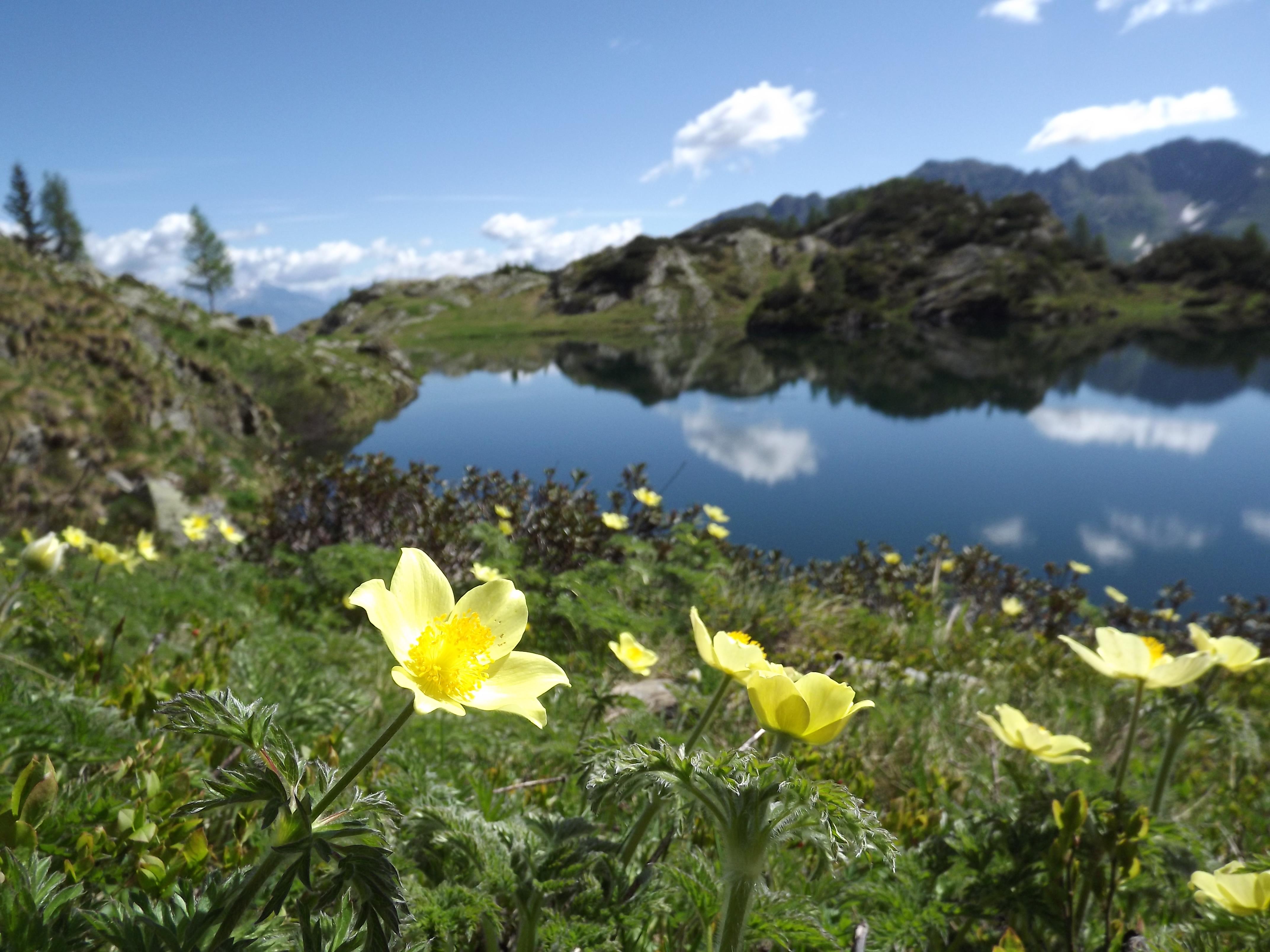 Foto Fiori Gialli.File Fiori Gialli E Lago Nero Jpg Wikimedia Commons