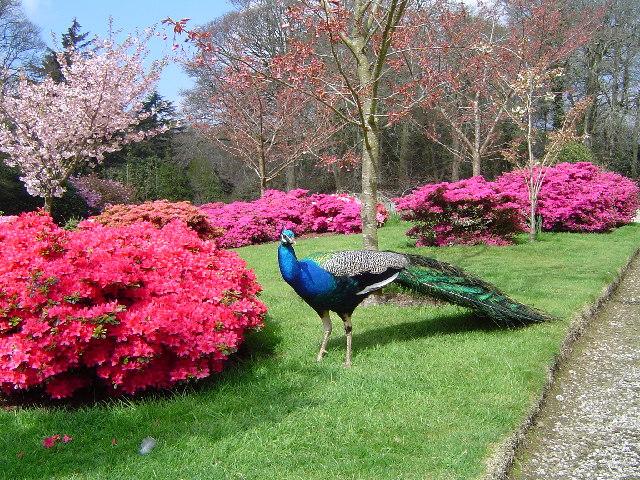 Arquivo: Jardins em Trevarno - geograph.org.uk - 32885.jpg
