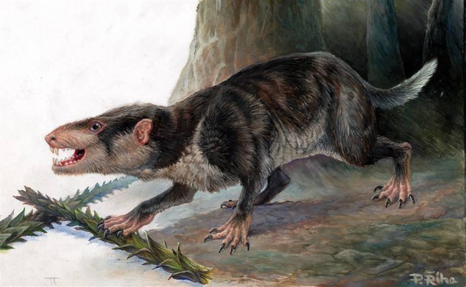 Depiction of Triconodonta
