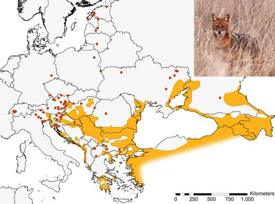 File:Golden jackal distribution in Europe 2015.png