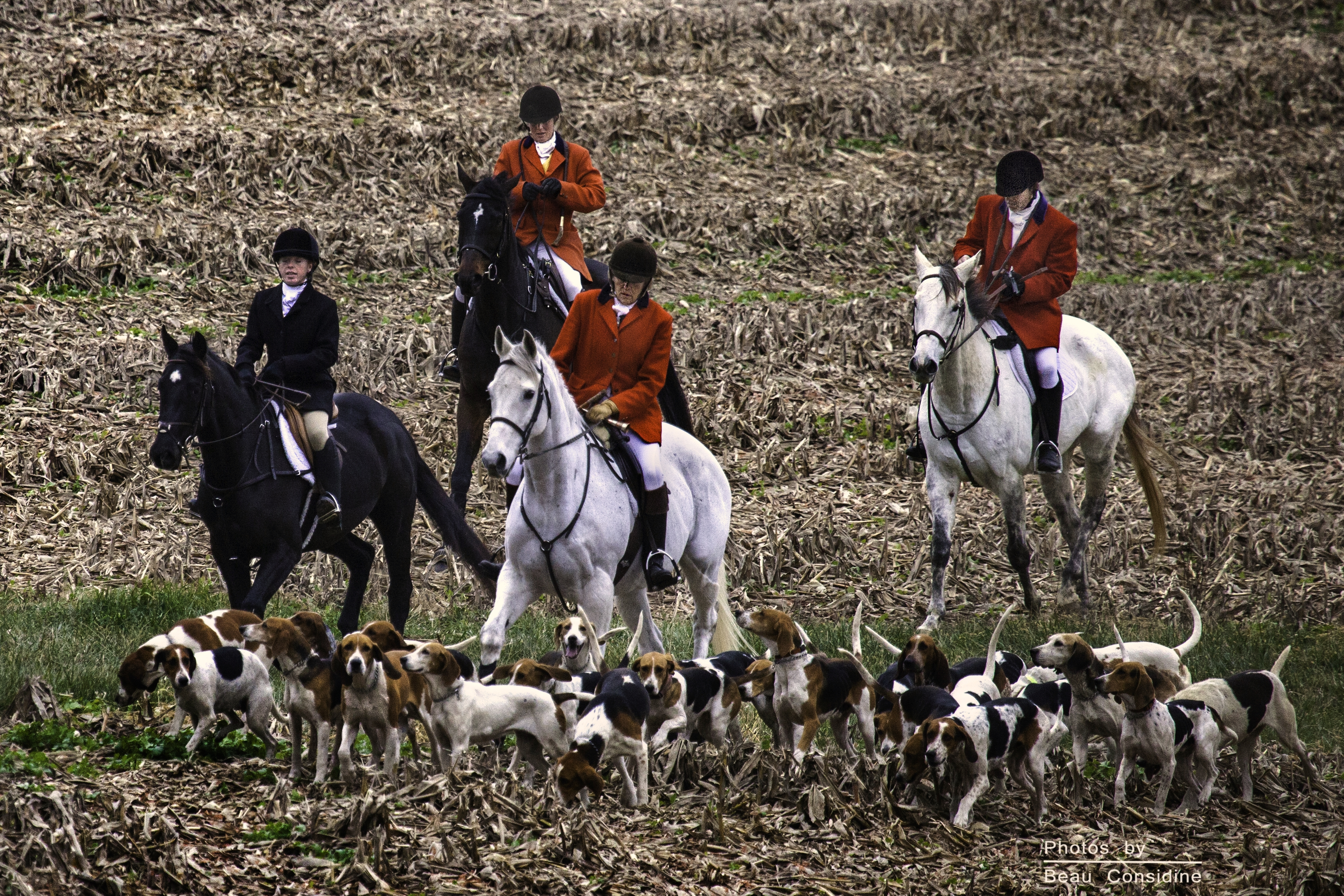 Image Result For Can Dogs Ride