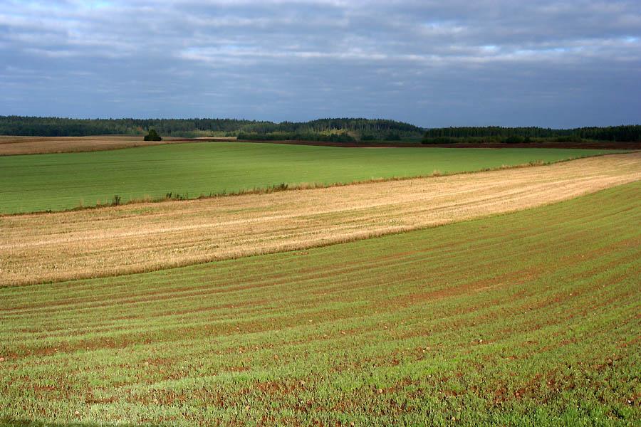Landscape_Bohoniki_Podlasie_Poland.jpg