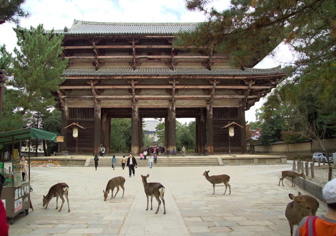 Nara Destination Guide - Triporati