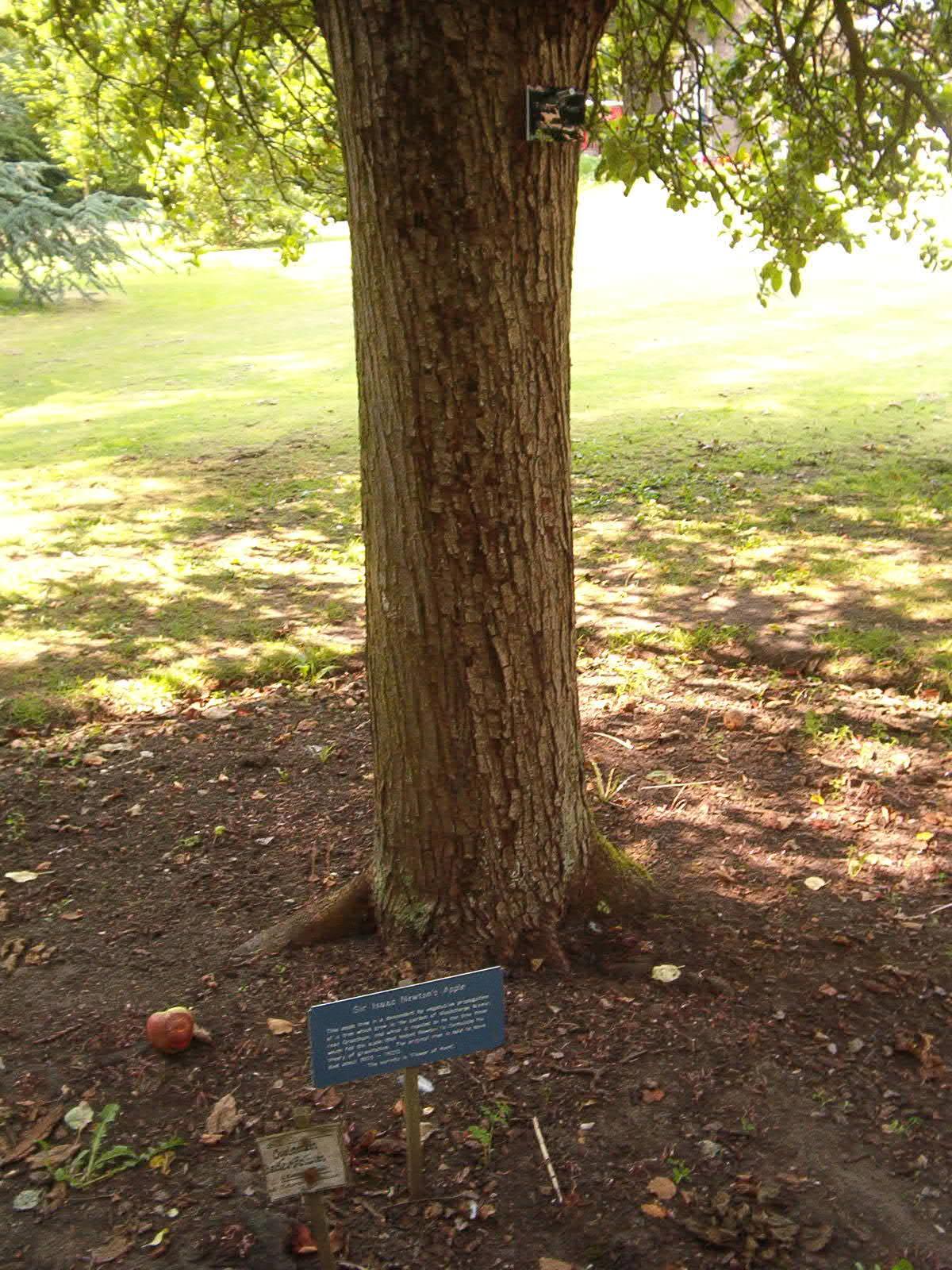 Newton'un başına elma düşmesiyle yerçekimini keşfettiği yer, Cambridge'deki Botanik bahçesi'nde bulunuyor.