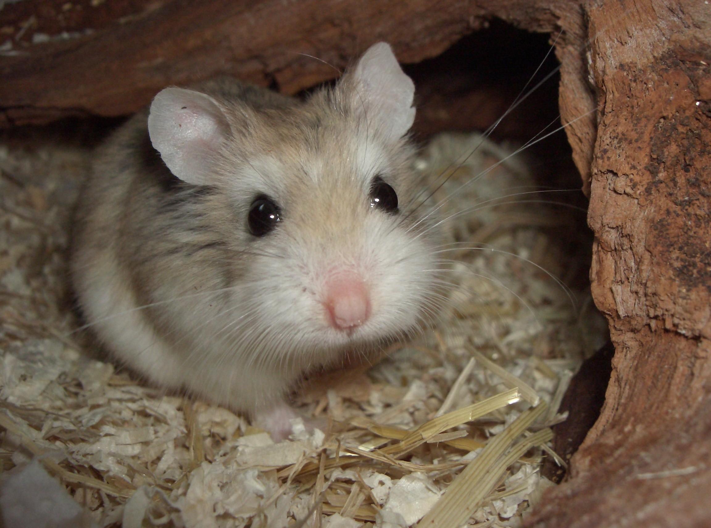 Hamster Porno Bilder