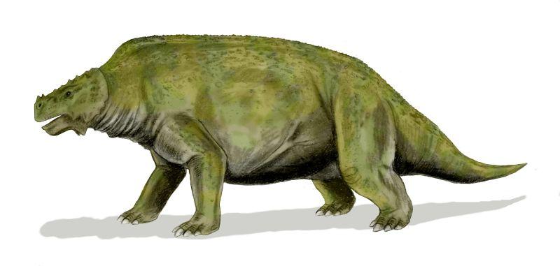 Scutosaurus BW.jpg