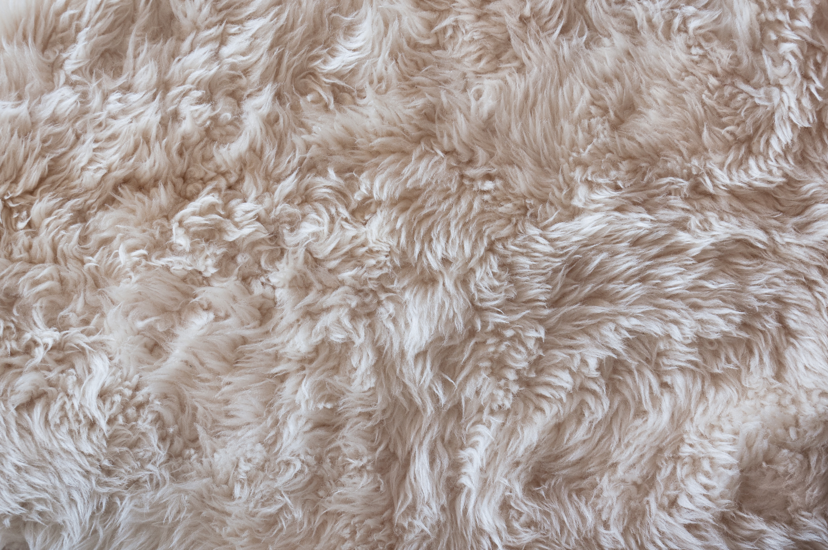 File:Sheepskin texture 2014.jpg - Wikimedia Commons