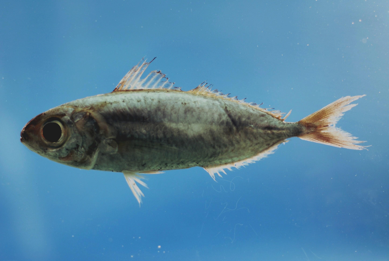 New Blog 1 Driftfish