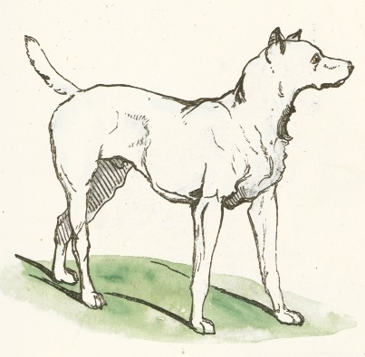 simple interphase drawing  Description Simple Dog Drawing.jpg