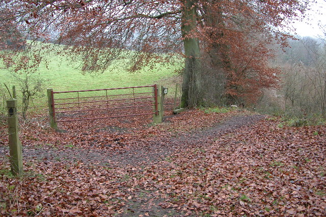 The Cotswold Way in Upton Wood - geograph.org.uk - 100146
