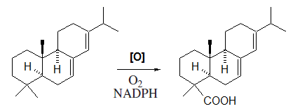 Abietic acid biosynthesis.png