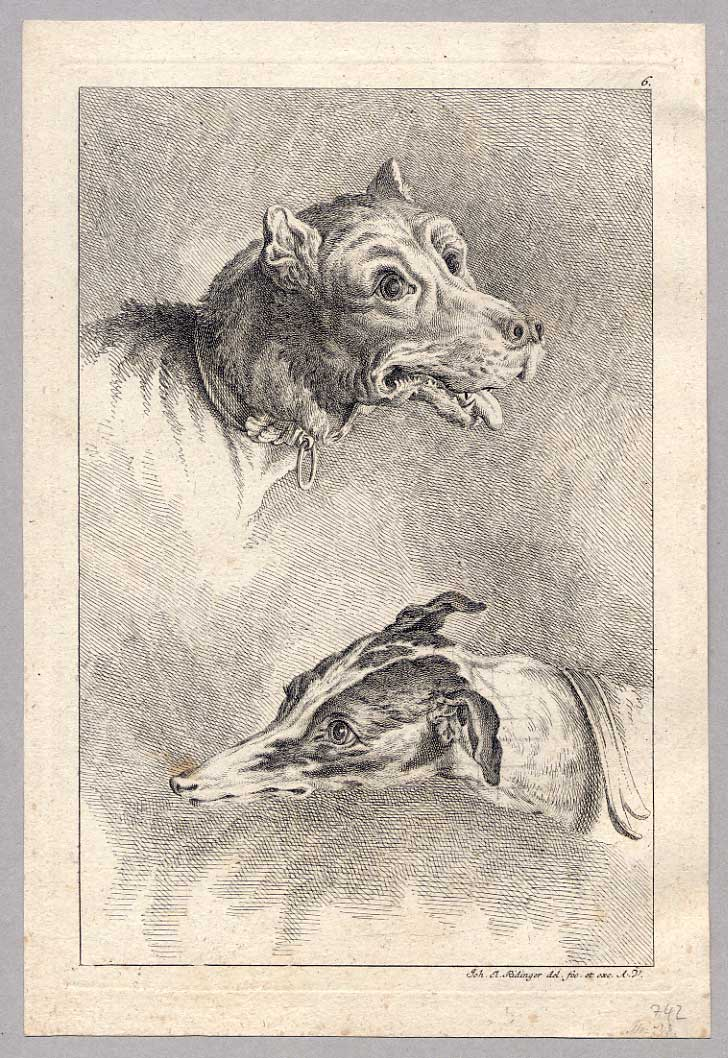File:Anatomie Studie Köpfe Hund 2 Ridinger.jpg - Wikimedia Commons
