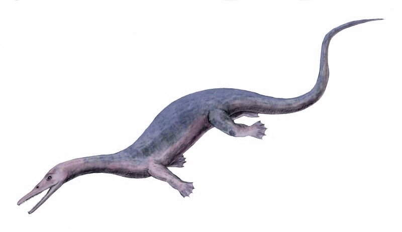 http://upload.wikimedia.org/wikipedia/commons/2/2e/Askeptosaurus_BW.jpg