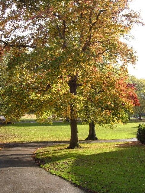 Belmont Park Exeter Wikipedia