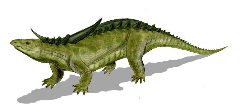 800 x 361 jpeg 27kBChasmatosaurus