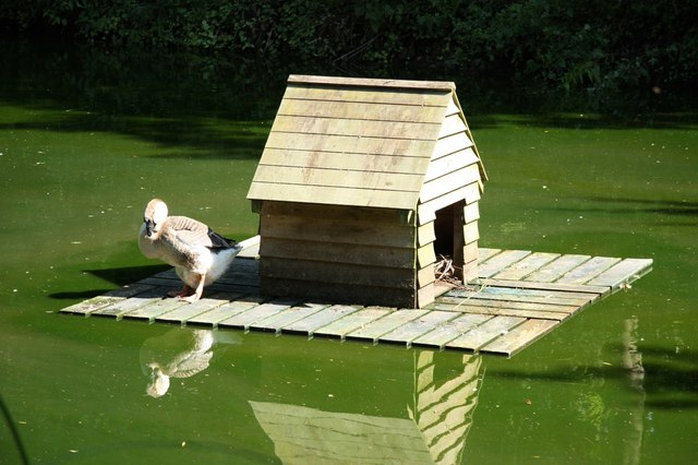 file duck house