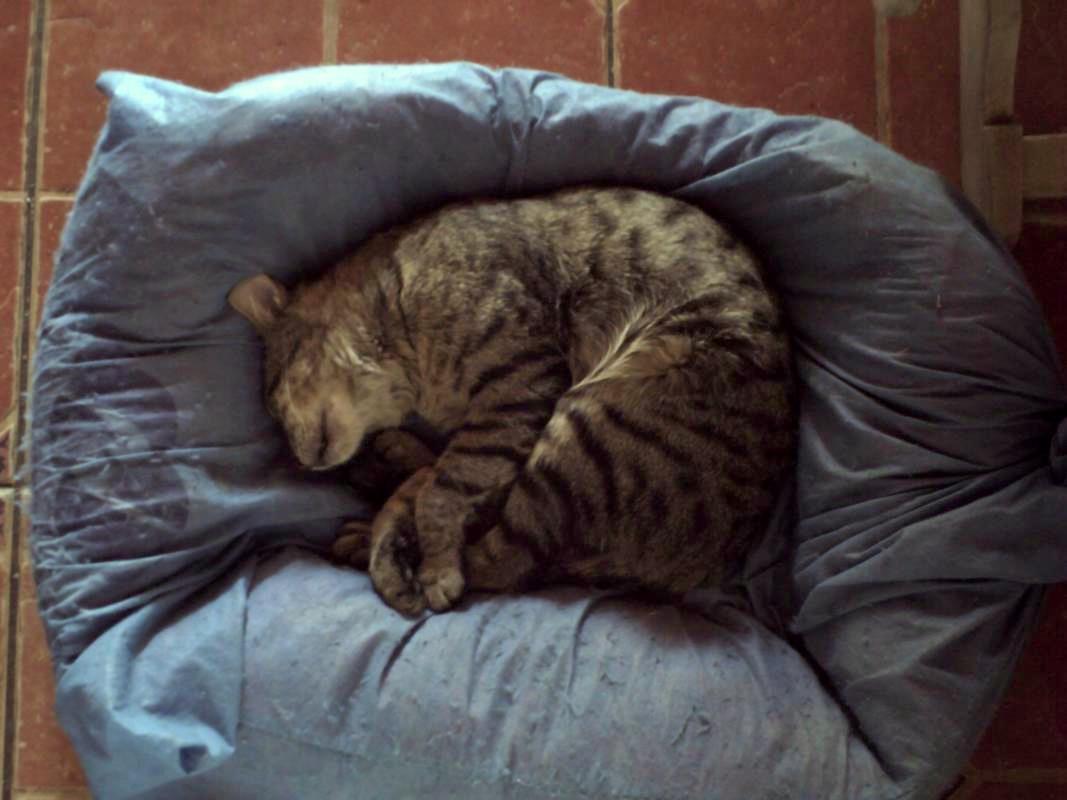 Bob Martin Cat Litter Kg