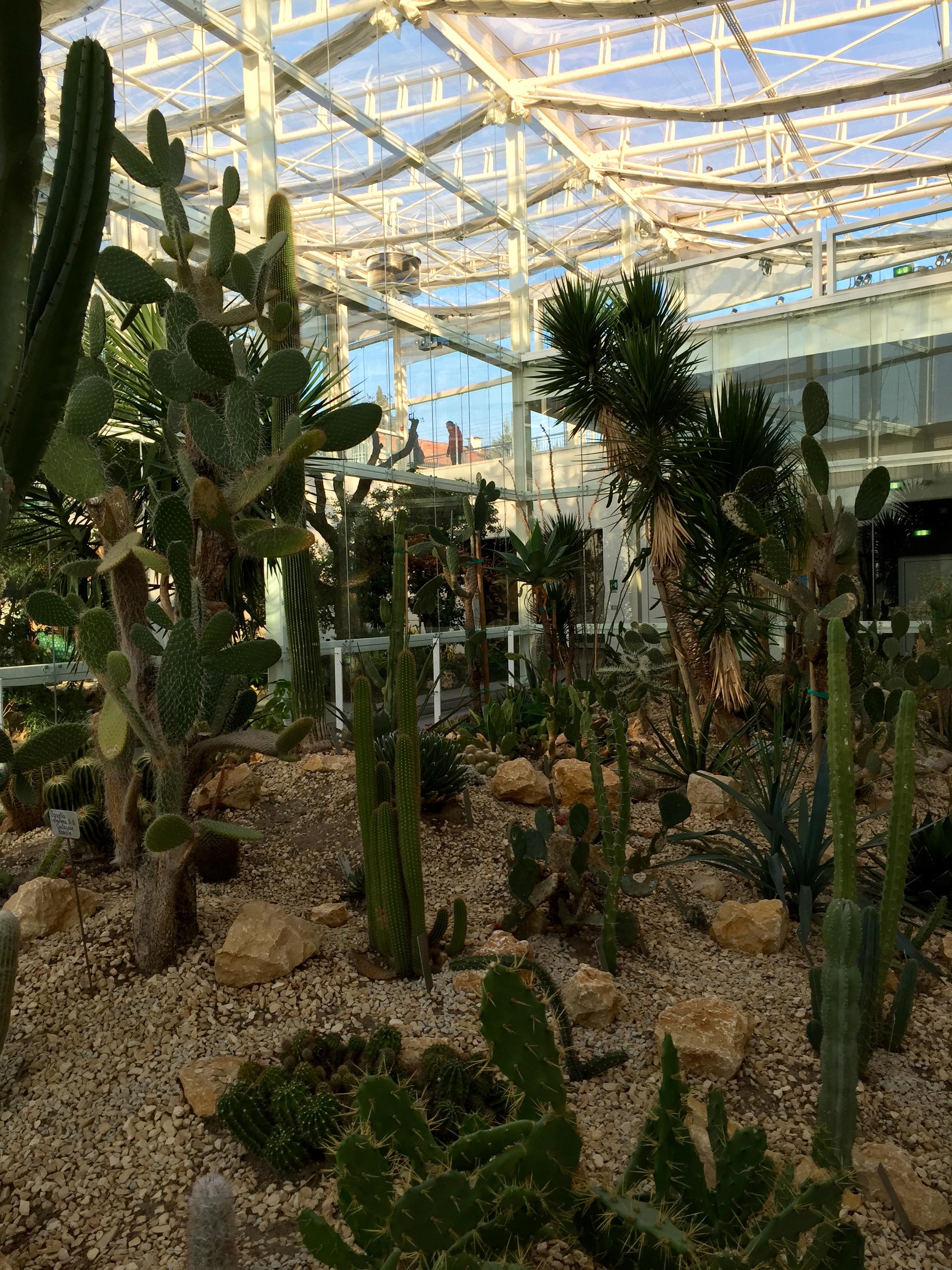 File giardino della biodiversit serra for Planimetrie della serra