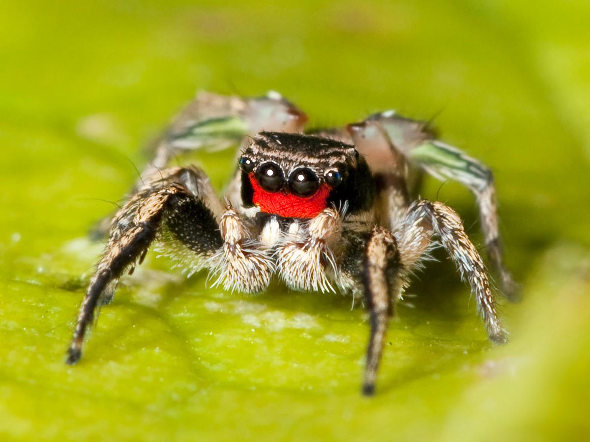 Мерзкие картинки с пауками, открытка днем
