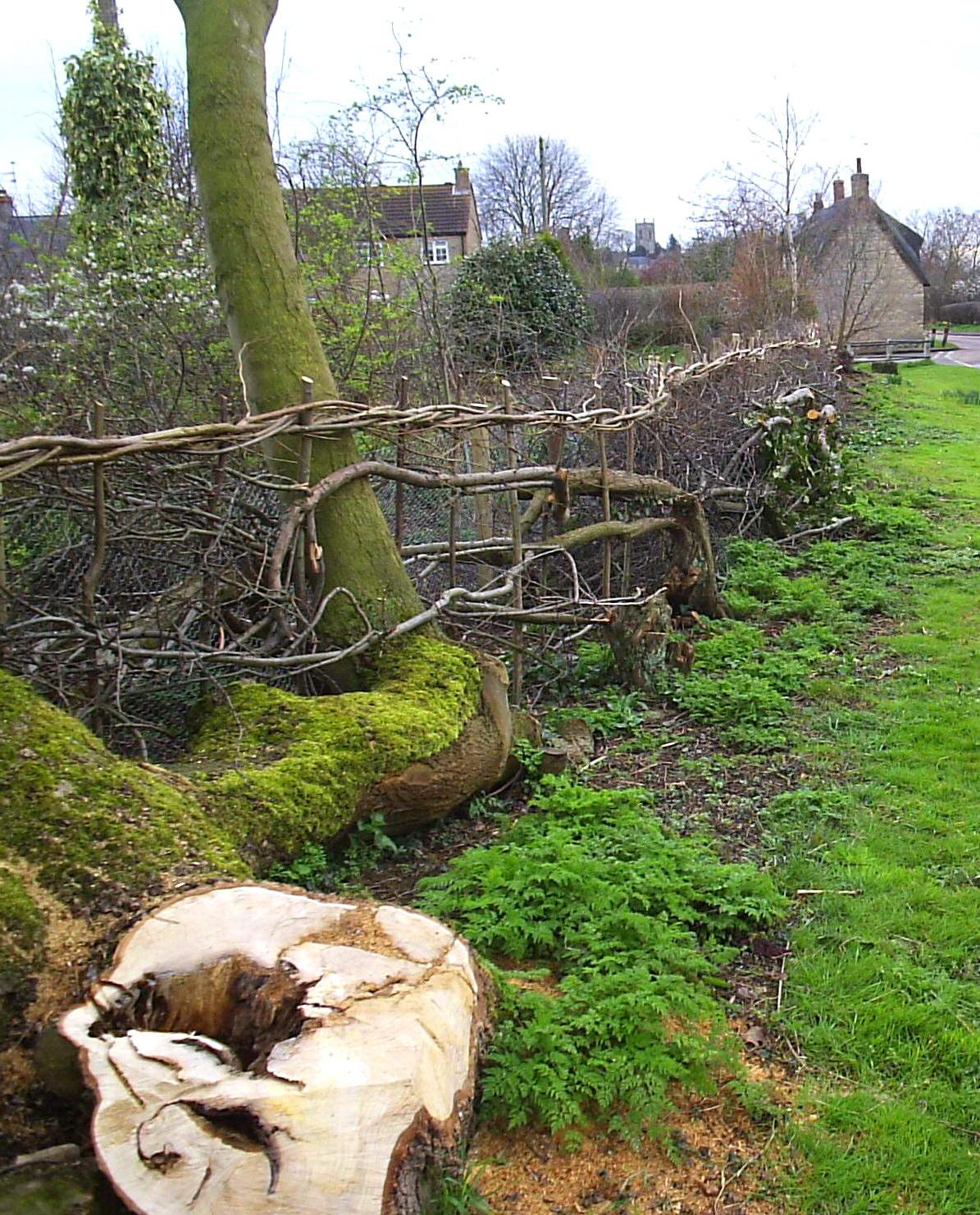 Faire Une Palissade Avec Des Branches plessage — wikipédia