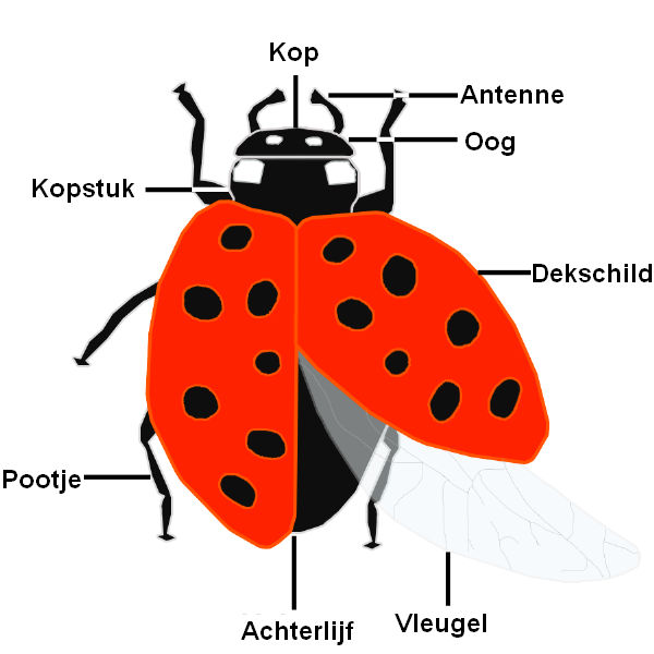 Ladybugs Fact For Kids Site Youtube Com
