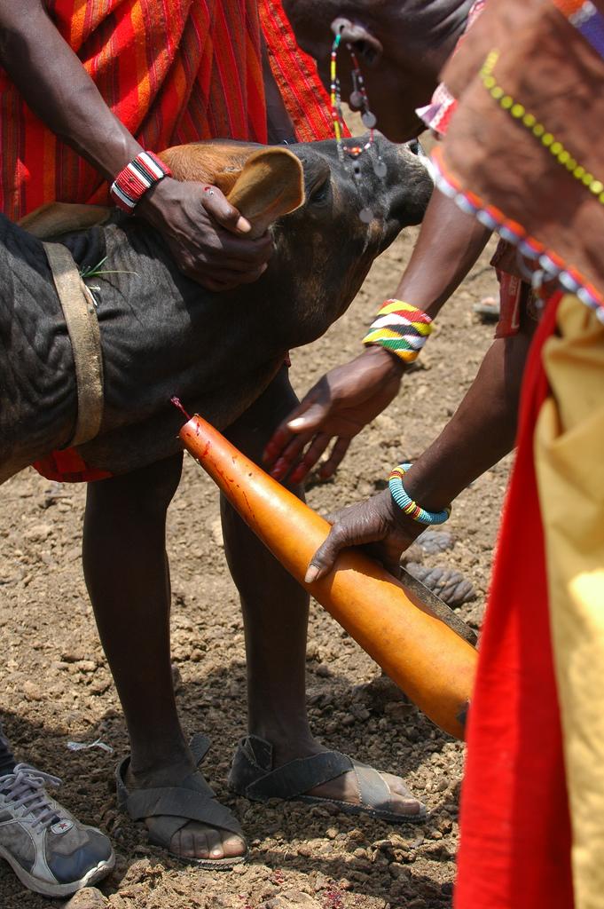 Körpergröße massai Maasai people