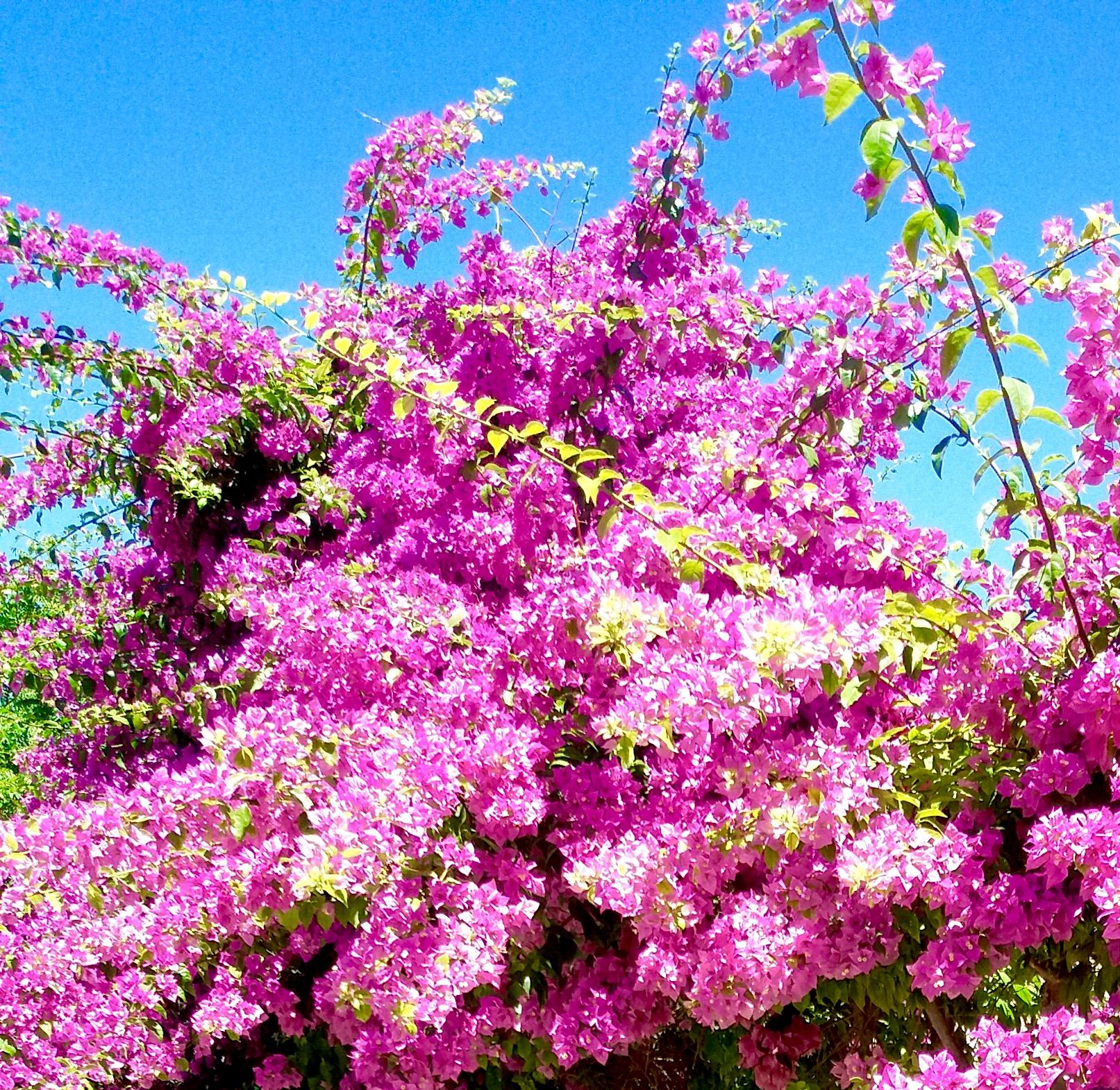 Filemediterranean flowerg wikimedia commons filemediterranean flowerg mightylinksfo