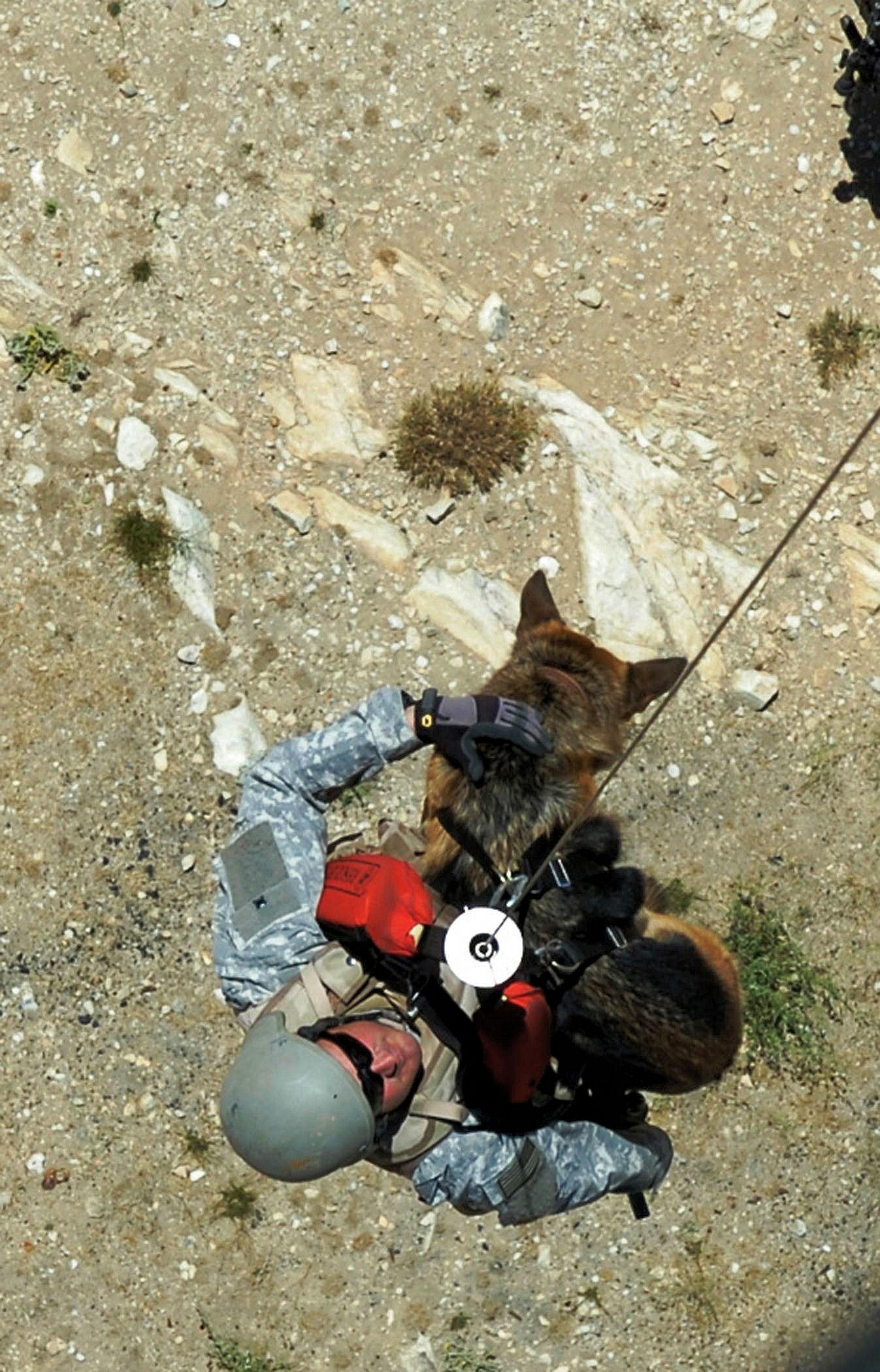 Description military dog being hoisted by a helicopter in afghanistan