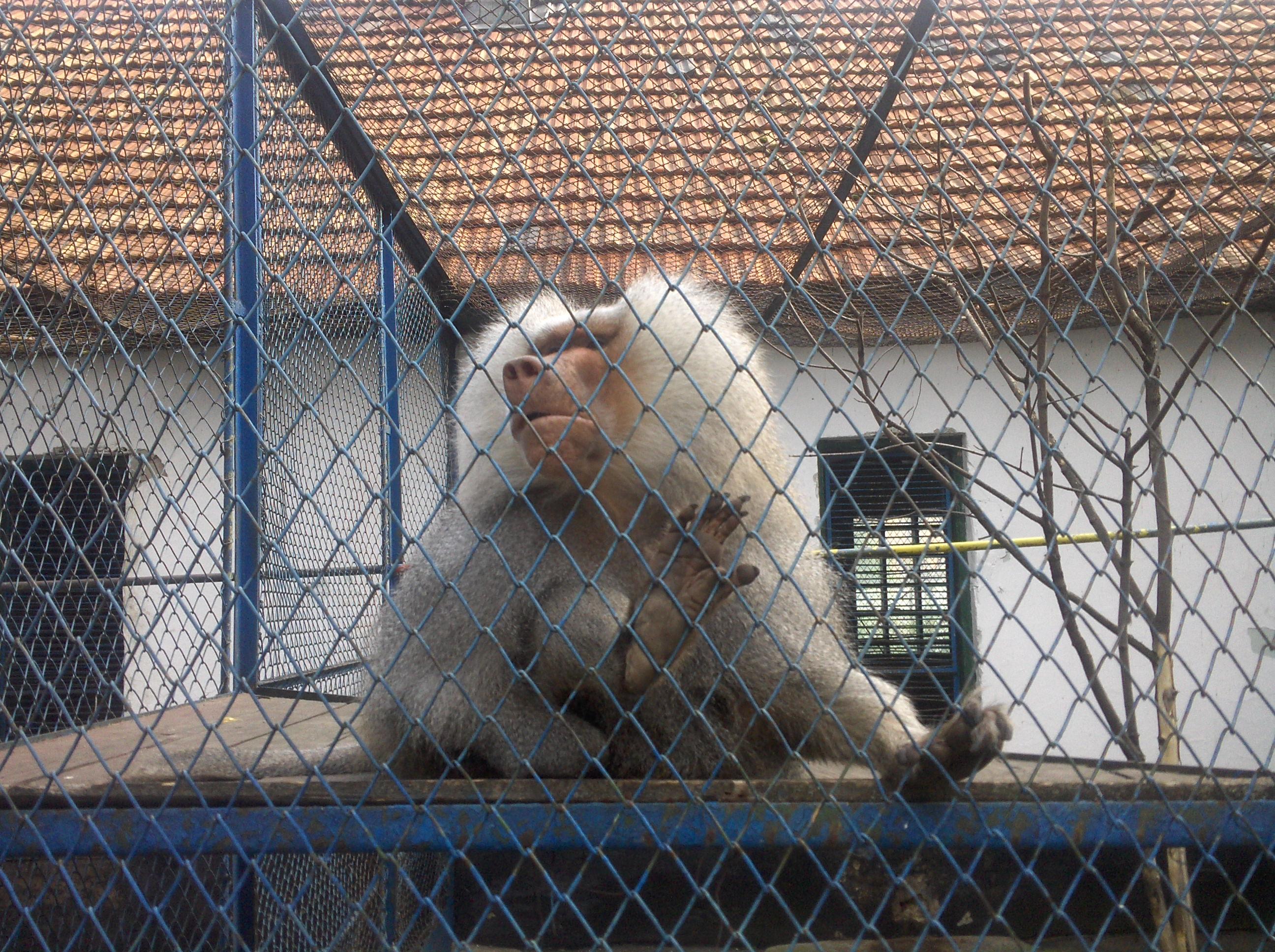 zoo Dancila