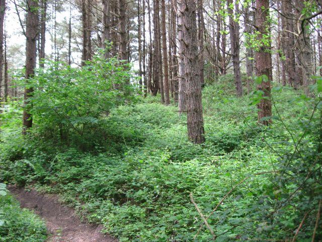 Path through Pembrey Forest - geograph.org.uk - 853831