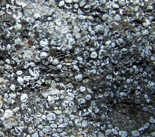 File:Phosphate-ooids.jpg