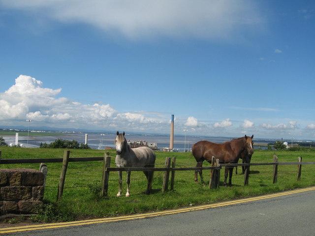 Ponies on Weston Road, Runcorn Hill - geograph.org.uk - 490087