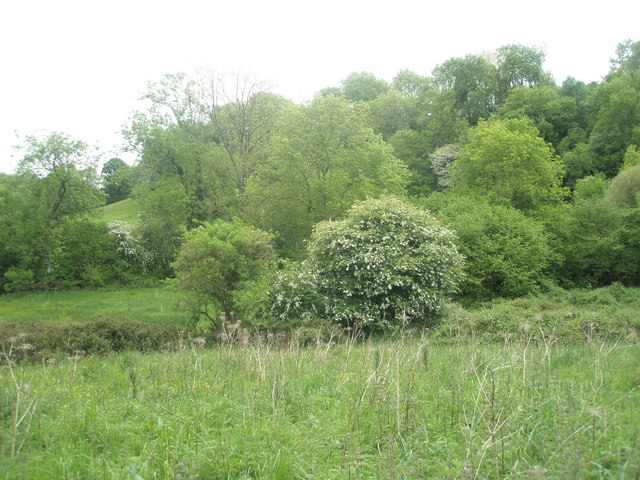 Spring on the Hangers Way - geograph.org.uk - 1324242