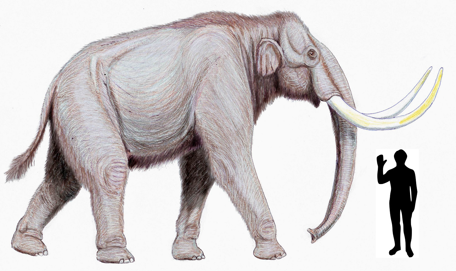 Your Favorite Mammoth/Mastodon - 364.1KB