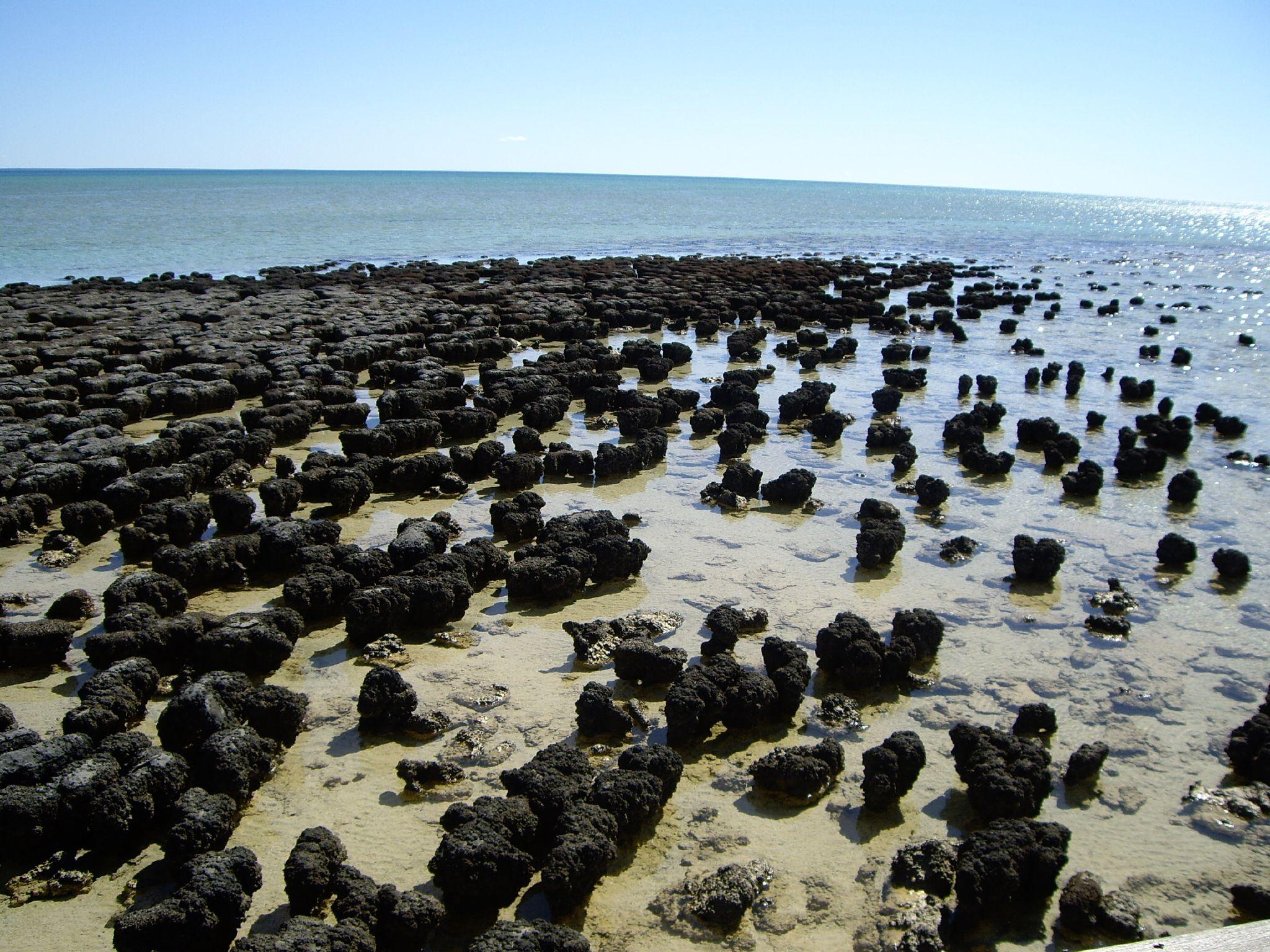 鯊魚灣擁有活生生的疊層岩結構,見證了地球最古老的生命起源;圖片來源:維基百科