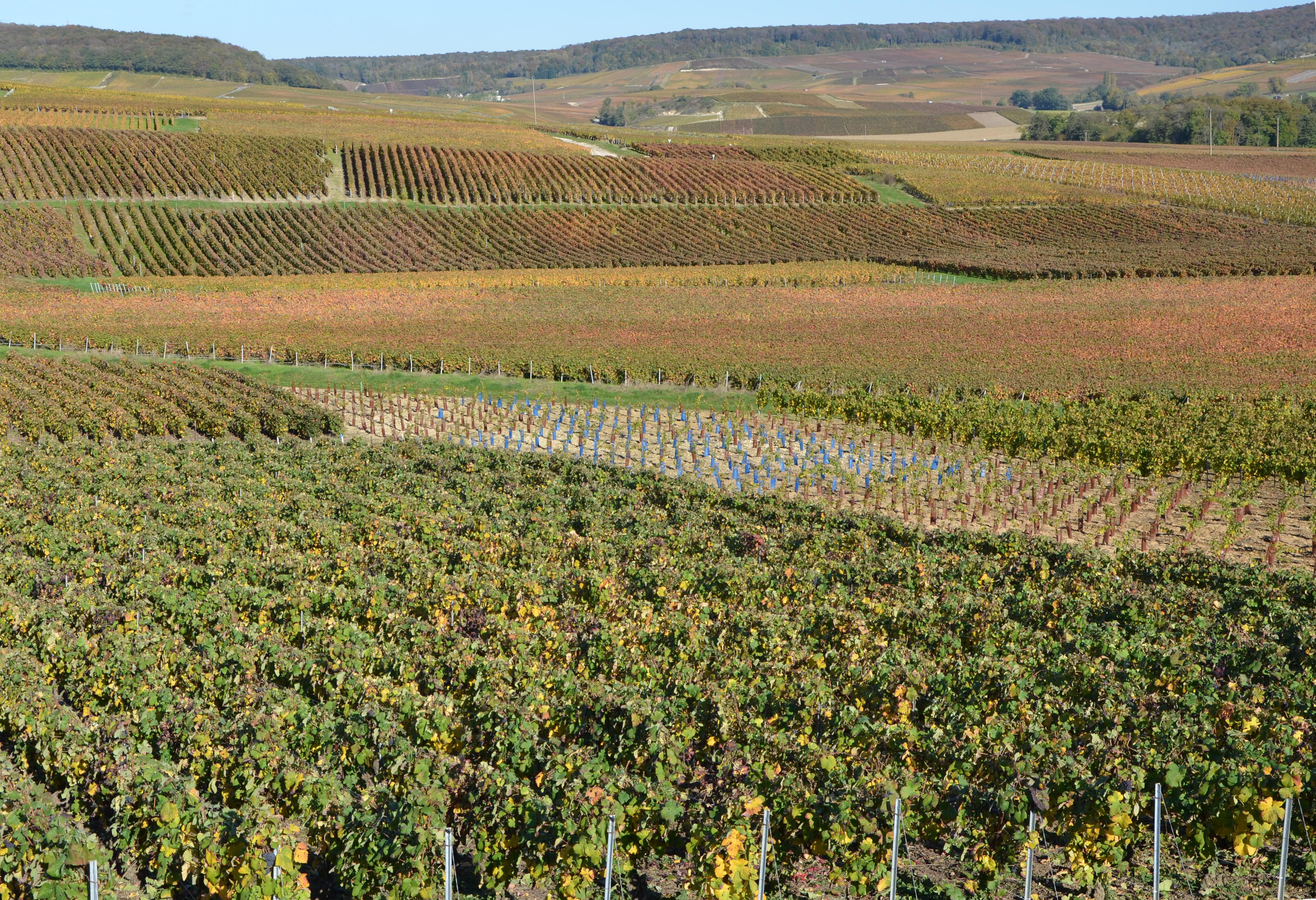 :vignoble-de-chagne-pres-de-fleury-la-riviere-dans-la-montagne-de