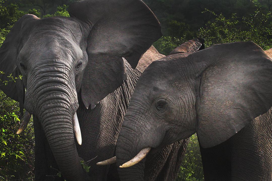 Http Www Africasafari Com Sita Tours Cfm Source Tourmm