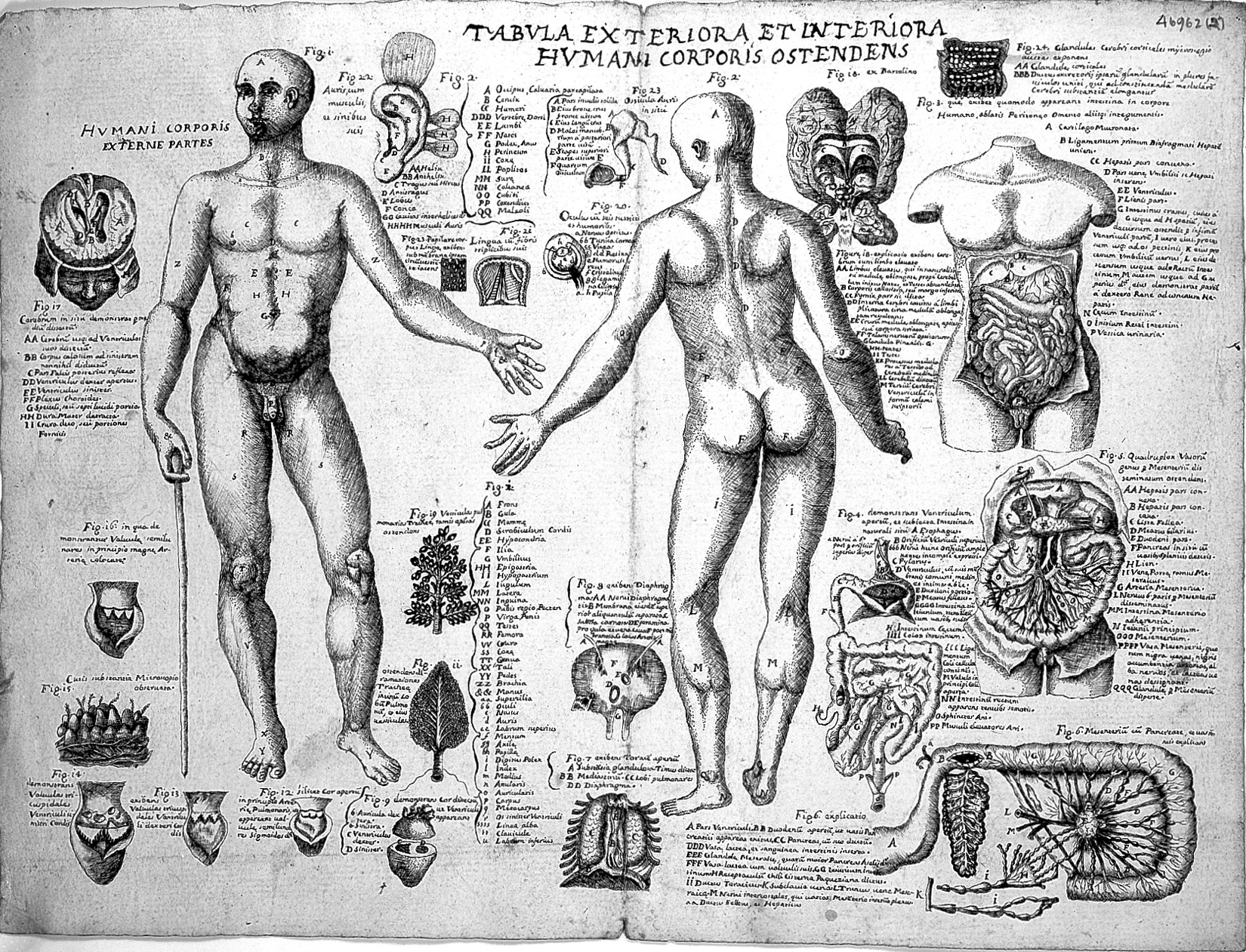 Fileanatomical Sketches Valverde Anatomy Early 17th Century