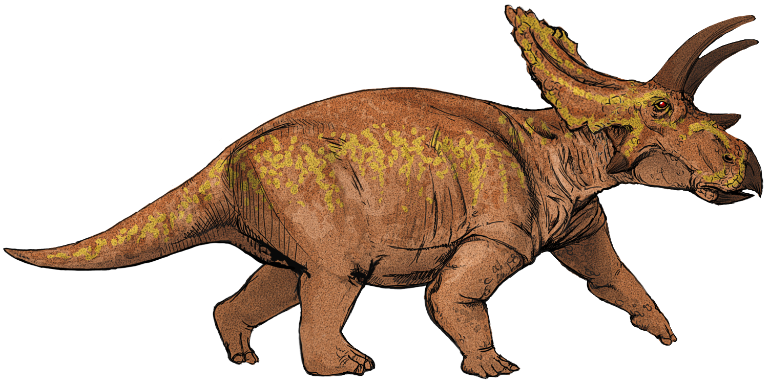 an introduction to the chasmosaurus from the age of dinosaurus Were any people, there were dinosaurs dinosaurs were one of several kinds  of prehistoric reptiles that lived during the mesozoic era, the age of reptiles.