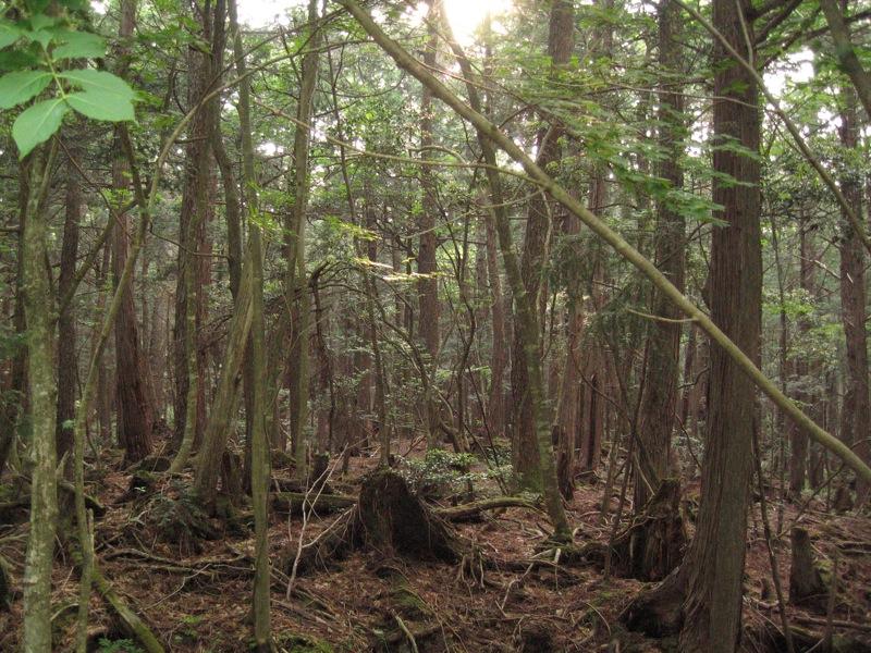Aokigahara forest 04.jpg